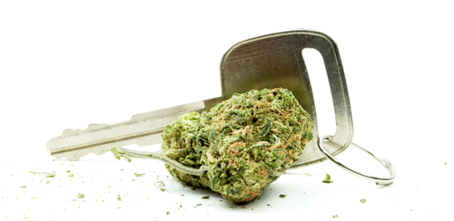 marijuanaDriving